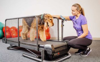 How to Build a Dog Treadmill
